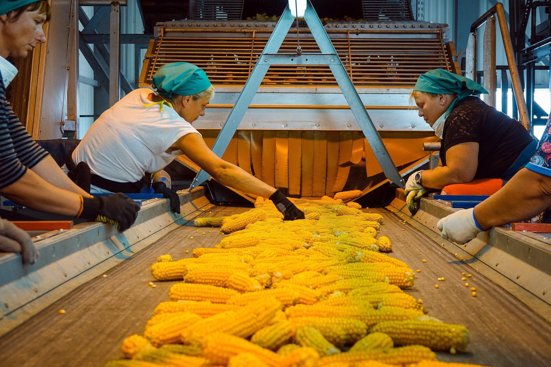 Завод LNZ почав свою роботу. фото 1 LNZ Group